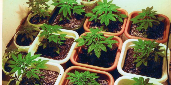 Top-Länder mit dem höchsten Marihuanakonsum